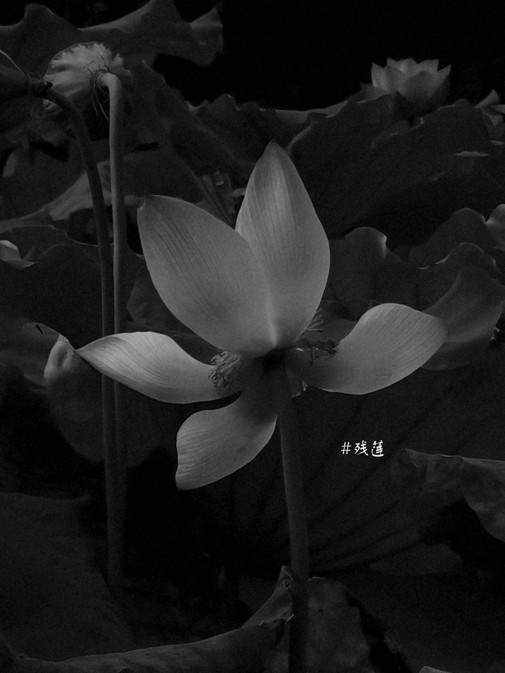"""""""一片一故事""""(by Hush)-萌哒校园"""
